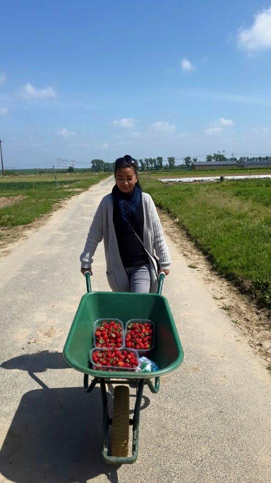 Strawberry (17)
